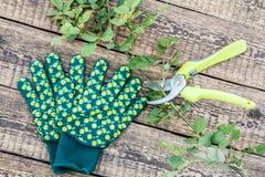 As luvas do jardim, a tesoura de podar manual e o ramo cortado de aumentaram na placa de madeira fotos de stock royalty free