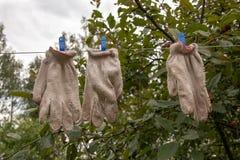 As luvas velhas do gardenng secam na corda com pinos azuis fotografia de stock royalty free