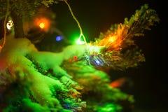 As luzes de brilho de uma árvore de Natal natural cobriram a neve. Macro Fotos de Stock Royalty Free
