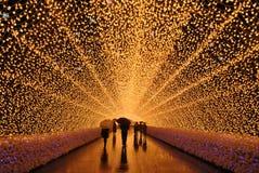As luzes do inverno de Nabana nenhum Sato fotos de stock royalty free