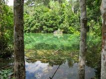 As máscaras da cena das cores verdes da mola quente pond cercado pelo tr Imagens de Stock Royalty Free
