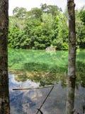 As máscaras da cena das cores verdes da mola quente pond cercado pelo tr Foto de Stock