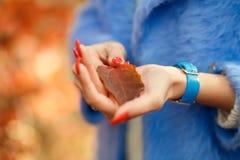 As mãos à moda da mulher do close-up com correia azul e as posses vermelhas dos pregos caídas folheiam no parque do outono fotografia de stock royalty free