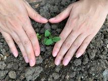 As mãos bonitas da mulher estão plantando árvores para o crescimento com amor, cultivo, conservação ambiental imagens de stock