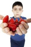 As mãos da criança que guardaram morangos Fotografia de Stock