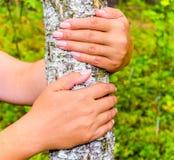 As mãos da menina que abraçam um tronco de árvore Para guardar o vidoeiro O conceito da unidade com natureza Força da tração da n imagens de stock