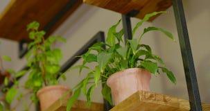 As mãos da moça puseram o potenciômetro da planta sobre a prateleira de madeira filme