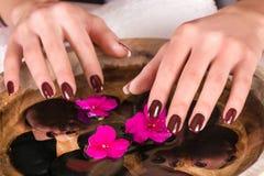 As mãos da mulher com pregos marrons coagulam à superfície da àgua polonês com flores roxas e as pedras pretas na bacia foto de stock