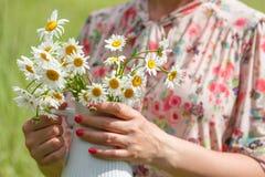 As mãos da mulher guardam o ramalhete de margaridas selvagens frescas no vaso Imagens de Stock