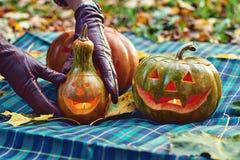 As mãos da mulher nas luvas de couro ajustam as abóboras de Dia das Bruxas exteriores no parque do outono Imagem de Stock