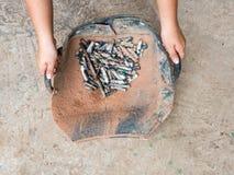 As mãos da mulher que guardam o shell dos moluscos deram forma à cesta da sucata da barra Fotografia de Stock