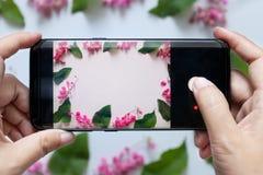 As mãos da mulher tomam a foto da flor da câmara digital esperta móvel do telefone ou do telefone celular imagem de stock