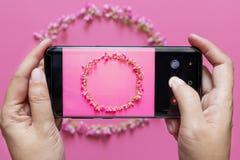 As mãos da mulher tomam a foto da grinalda da flor da câmara digital esperta móvel do telefone ou do telefone celular fotografia de stock