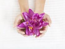 As mãos das mulheres com flor dos lírios de água Foto de Stock