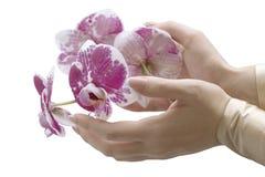 As mãos de mulher elegante com orquídea fotografia de stock