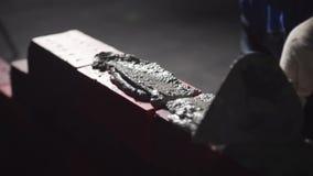 As mãos do construtor puseram um almofariz do cimento estoque A mão faz a alvenaria do close-up do tijolo Fundo preto video estoque