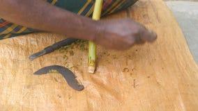 As mãos do corte asiático irreconhecível do homem descascam da árvore do canella na natureza Braços do homem indiano que processa video estoque