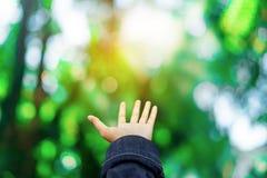 As mãos do homem alcançam para fora ao bokeh da natureza do verde floresta como rezar e pedem algo imagem de stock royalty free