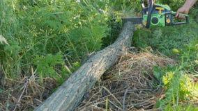 As mãos do lenhador do homem que desbastam abaixo de um tronco de árvore vivo na serra de cadeia verde das madeiras filme