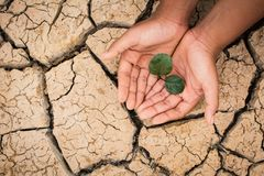 As mãos do menino salvar pouca planta verde em terra seca rachada Fotografia de Stock