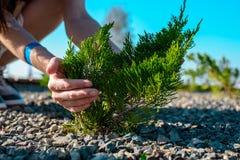 As mãos do ` s das mulheres abraçam a árvore verde nova que cresce através do cascalho, conservação da natureza, proteção ambient Foto de Stock Royalty Free