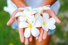 As mãos fêmeas novas que oferecem o frangipani, flumeria florescem Foto de Stock