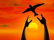 As mãos livram o pássaro no por do sol Imagens de Stock