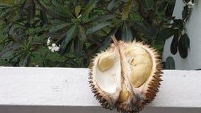 As mãos masculinas abrem o durian maduro video estoque