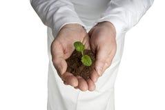 As mãos masculinas colocadas abrem o seedling da planta de w Imagens de Stock Royalty Free