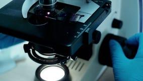 As mãos nas luvas pesquisam o material da bioquímica no laboratório usando o microscópio video estoque