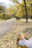 As mãos nos mitenes com as folhas de bordo no outono estacionam fotografia de stock royalty free