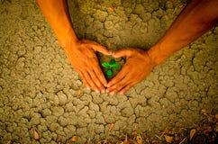 As mãos que formam um coração dão forma em torno de uma árvore que cresce em terra rachada Fotografia de Stock