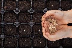 As mãos que guardam a mola semeiam pronto para semear Foto de Stock