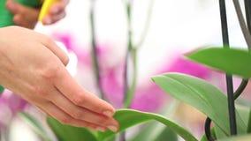 As mãos que pulverizam nas folhas, tomam das plantas das flores filme