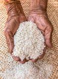 As mãos superiores muito velhas da mulher enrugaram a pele com arroz fotos de stock