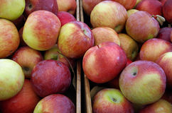 As maçãs em umas caixas esperam o mercado Imagens de Stock