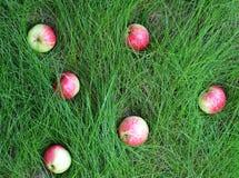 As maçãs encontram-se na vida da grama verde e do outono ainda Fotografia de Stock