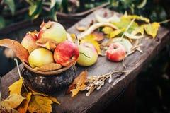 As maçãs home no jardim no fundo de madeira com sol iluminam-se Fotografia de Stock