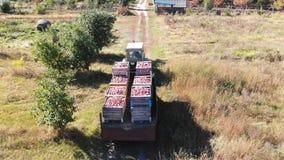 As maçãs jardinam trator video estoque