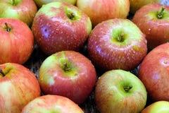 As maçãs maduras vermelhas e verdes lavadas com água deixam cair Fotografia de Stock Royalty Free