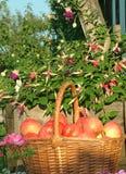 Maçãs vermelhas na cesta entre flores fotos de stock