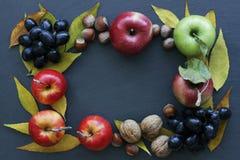 As maçãs, porcas, uvas, amarelo do outono saem no fundo escuro, no quadro do fruto e nas folhas de outono foto de stock