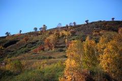 As madeiras do outono Imagem de Stock Royalty Free