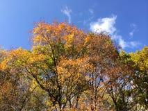 As madeiras do outono Foto de Stock