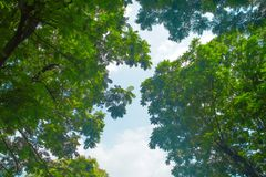 As maneiras de árvore fotografia de stock royalty free