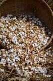 As maneiras de arroz tailandês em upcountry tailandês Imagem de Stock Royalty Free