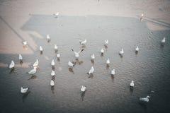 As massas das gaivotas estão na praia que espera alimentando a para comer o alimento foto de stock royalty free
