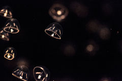 As medusa minúsculas do guarda-chuva chamaram indicans de Eutonia Fotografia de Stock