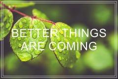 As melhores coisas estão vindo O verde deixa o fundo Fotografia de Stock