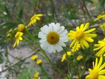 As melhores flores Imagem de Stock